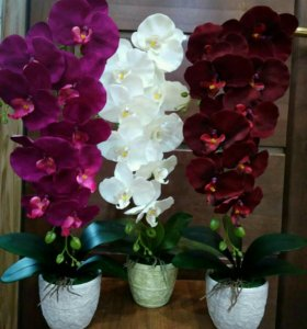 Орхидеи. Ручная работа