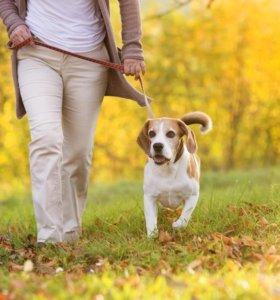 Прогулка собак