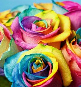 Розы разноцветные и белые на заказ с доставкой
