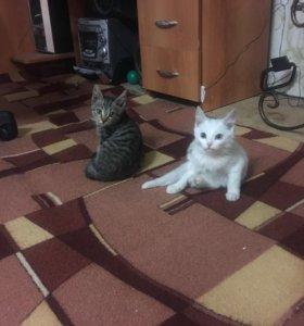 Отдам кошек к лотку приучены