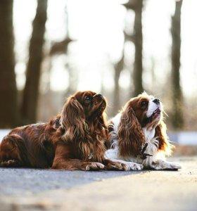 Фотограф. Фотосессии для животных