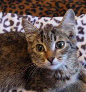 Милая котейка с красивыми глазами