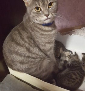 Котики мальчики