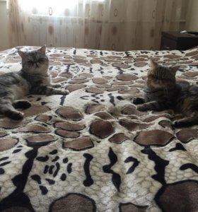 Котики ищут подружек.
