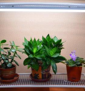 Фитосветильник для растений ЛучОК 16 ВТ