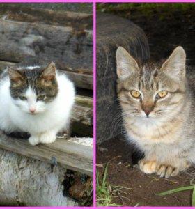 Котятки-девочки