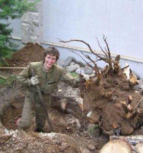 Уборка участка. Спил деревьев