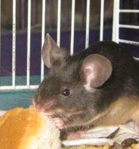 Мышка сатиновая