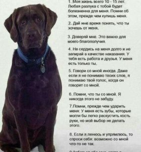 Возьму собаку!