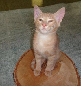 Кот мышелов рыжий бесплатно в добрые руки