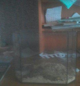 Джунгарские хомячки с аквариумом