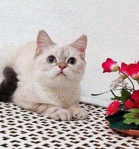 Перспективный котик