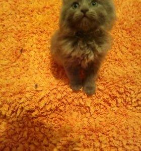 Котятки- метисы