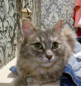 Кошка Афина в Добрые руки (стерилизована)