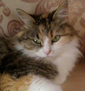 Кошка Наташка (стерилизована)