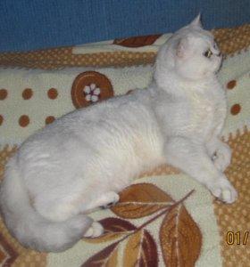 котик вязка