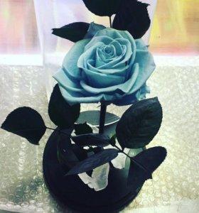 Роза в колбе ! + Подарок