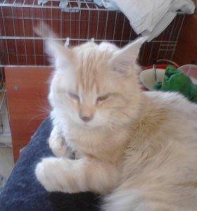 Котята мейкунята