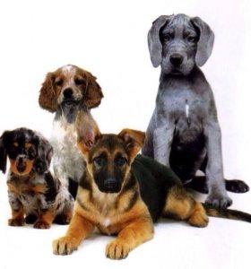 Лагерь дневного содержания собак