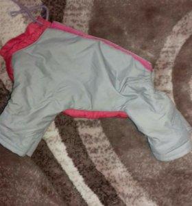 Одежда для собак маленьких пород.