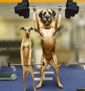 Дог- фитнес и реабилитация собак