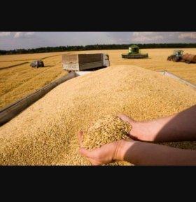 Комбикорма, зерно, сено, солома