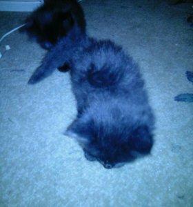 2 черных кота 1 кошка 1 кот