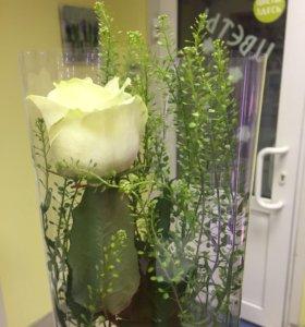 Белая роза с зеленью 70 см цветы