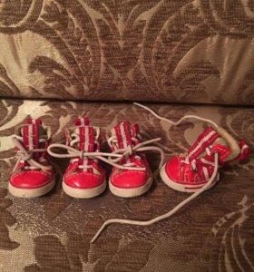 Обувь ботинки для собак