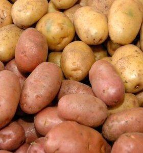 Картошка 200 рублей, внутри белая вкусная.