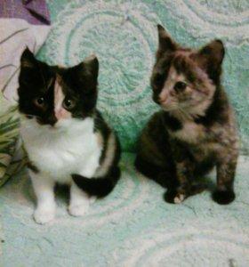 Котики свежие. Урожай этого года