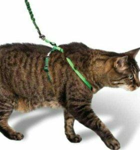 Шлейка для кошки или маленькой собачки
