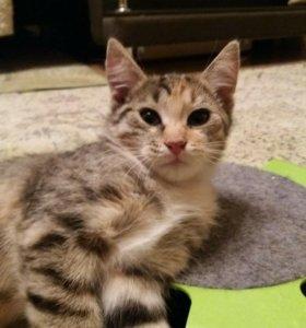 Котята-девочки в надежные руки