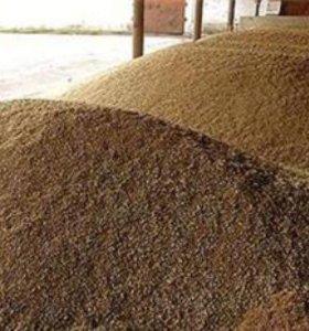 Зерно пшеницы.