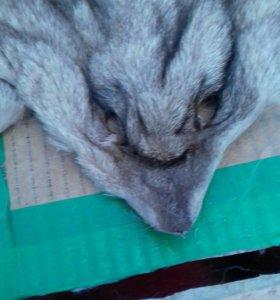 Мордочки волка