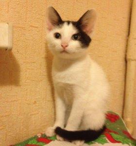 Милый котёнок от домашней кошки 4 месяца
