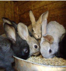 Кролики простой породы
