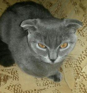 Котенок 8ми месяцев.