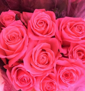 Розово оранжевые розы цветы спб
