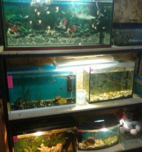 Стойка для разведения рыбок