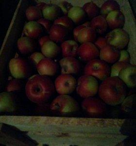 """Яблоки - """" Айдоред""""."""