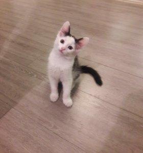 Котёнок, Кошка