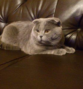 Вязка с опытным котом.