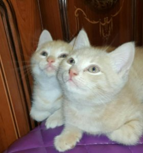 2 котёнка