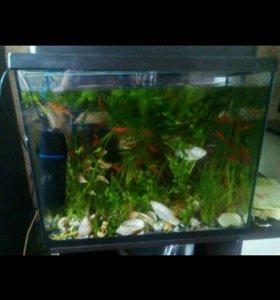 Аква с рыбками и всем содержимым