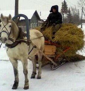 Зимние сани и конный сбруй
