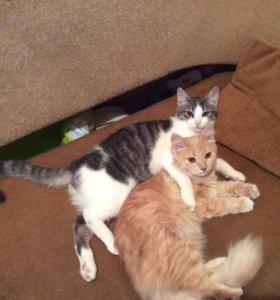 пропали два кота