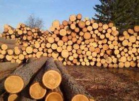 Лес сосновый и еловый