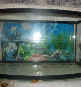 аквариум на 50литров