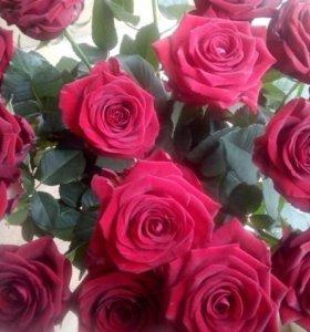 Цветы и Фейерверки